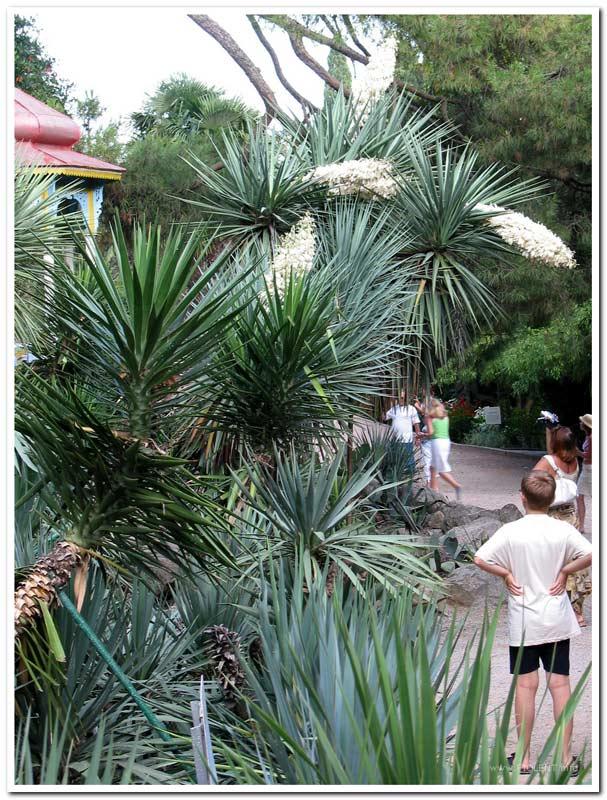 http://fiolent.biz/images/nikitsky_garden.jpg